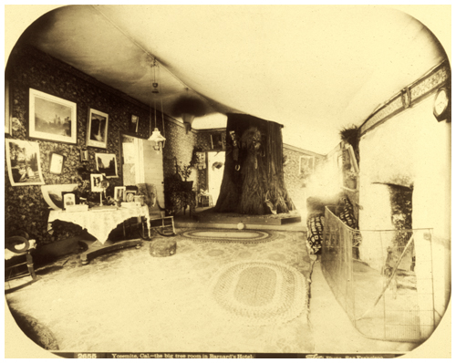 Carleton E. Watkins, 2655 Yosemite, Cal. - the big tree room in Barnard's Hotel, c. 1870s