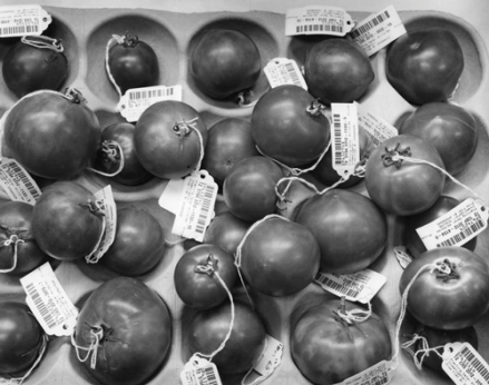 Catherine F. Wagner. Genetically Engineered Tomatoes. 1994. Gelatin silver print. Henry Art Gallery, gift of Burt and Jane Berman, 2001.219.