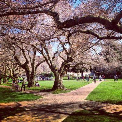 Photo by Delaney Cerna courtesy the University of Washington