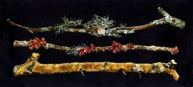 Angela Mele. Lichens of North Florida [detail].