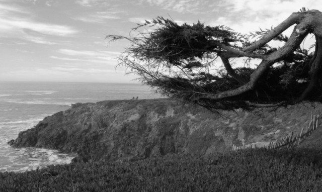 "Photo credit: Craig Bassam, BassamFellows Journal. ""Into the wild. Before its construction, The Sea Ranch was a working sheep ranch on rugged land that stretched ten miles long and around one-mile inland."""